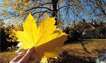 Создаем букеты изосенних листьев иимпровизируем смытьем рук